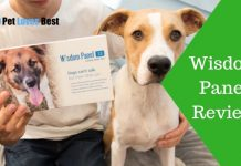 Featured Image Wisdom Panel Review