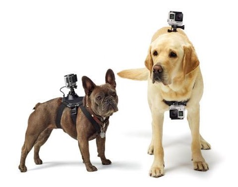 GoPro Fetch Action Camera Harness