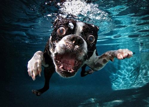GoPro Fetch Water