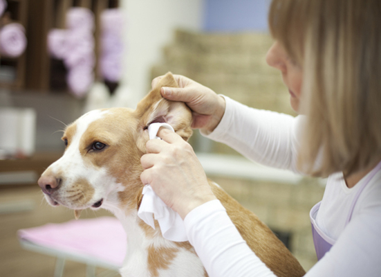 How to Prevent Dog Ear Infection
