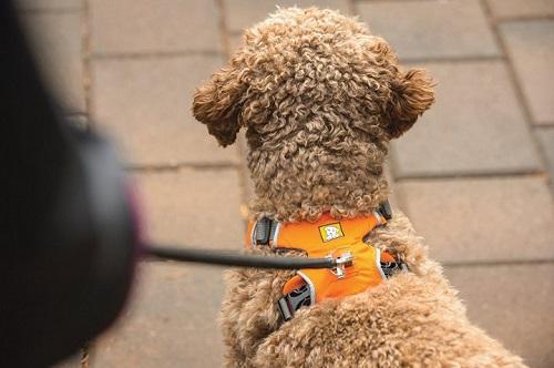 Ruffwear Front Range Harness top leash