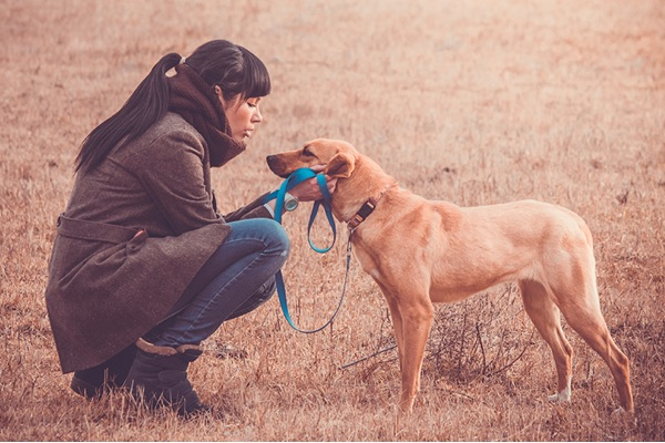 Train Your Dog with Electric Fence - Slow & Steady Approach