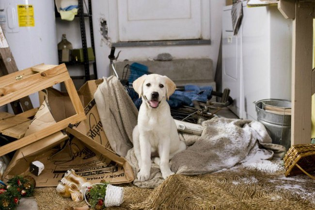 dog chewing behavior and dog bed