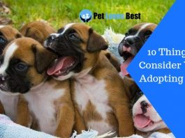 Featured Image 10 Things to Consider When Adopting a Pup