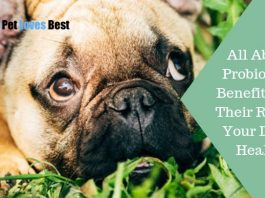 Featured Image All About Probiotics! Benefits and Their Role in Your Dog's Health