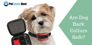 Featured Image Are Dog Bark Collars Safe?