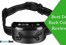 Featured Image Best Dog Bark Collar Reviews