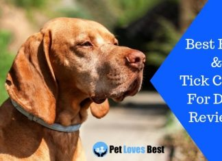 Featured Image Best Flea & Tick Collar For Dogs Reviews