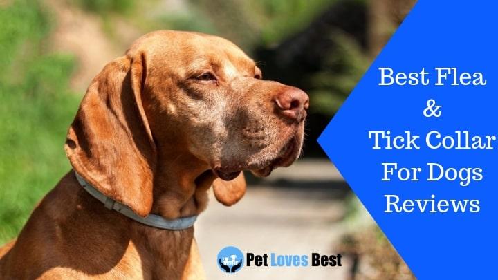 10 Best Flea Collar For Dogs In 2019 Flea And Tick