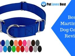 Featured-Image-Best-Martingale-Dog-Collars-Review