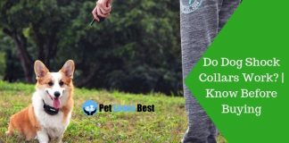 Featured Image Do Dog Shock Collars Work? | Know Before Buying