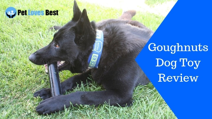 Featured Image Goughnuts Dog Toy Review