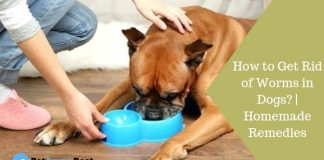 Featured Image How to Get Rid of Worms in Dogs? | Homemade Remedies