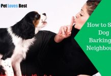 Featured Image How to Stop Dog Barking at Neighbours?