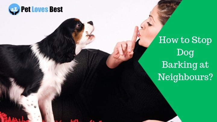 How to Stop Dog Barking at Neighbours? | Teach Your Fido in a Hassle