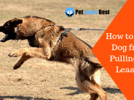 Featured Image How to Stop Dog from Pulling on Leash?