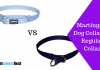 Featured Image Martingale Dog Collar Vs Regular Collar