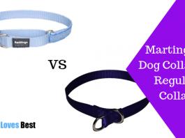Featured Image Martingale Dog Collar Vs Regular Collar