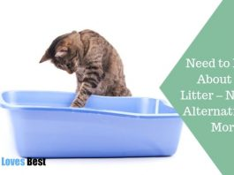 Featured Image Need to Know About Cat Litter – Natural Alternatives & More
