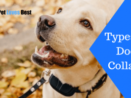 Featured Image Types of Dog Collars