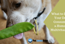 Featured Image What to Do If Your Dog Consumes a Human Multivitamin?