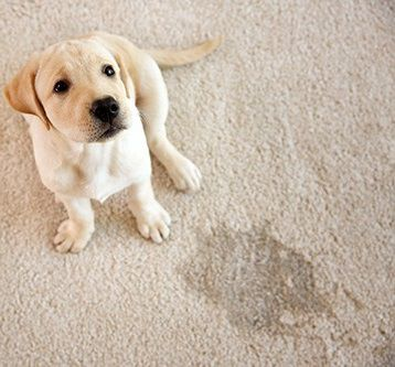 Pet Enzyme Cleaner for Organic Stains