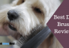 Featured Image Best Dog Brush Reviews