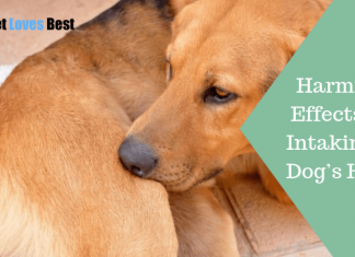 Featured Image Harmful Effects of Intaking a Dog's Hair
