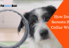 Featured Image How Does Seresto Flea Collar Work?