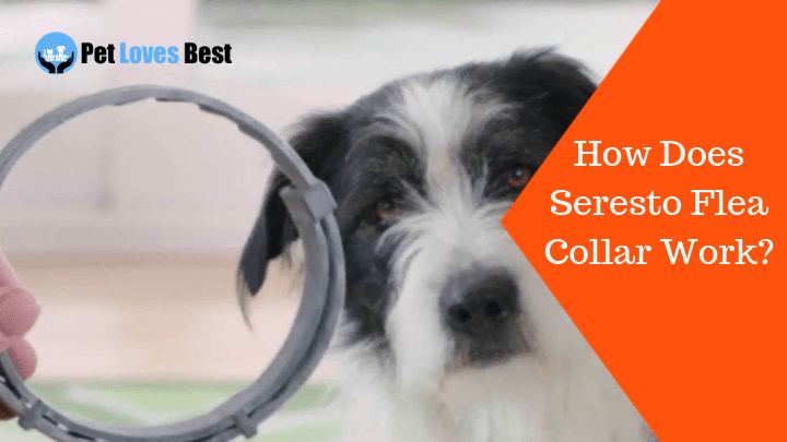 How Does Seresto Flea Collar Work What Are Its Active Ingredients