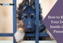 Featured Image How to Keep Your Dog Inside the Fence