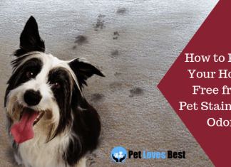 Featured Image How to Keep Your House Free from Pet Stains and Odor