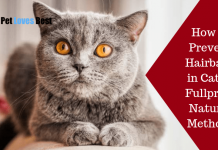 Featured Image How to Prevent Hairballs in Cats – Fullproof Natural Methods