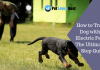 Featured Image How to Train a Dog with an Electric Fence | The Ultimate 5-Step Guide