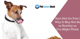 Featured Image Raw Diet for Pets | Why It May Not Be as Healthy as You Might Think