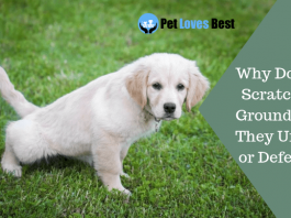 Featured Image Why Do Dogs Scratch the Ground After They Urinate or Defecate?