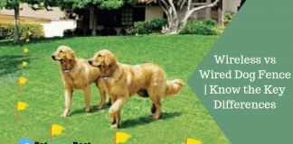 Featured Image Wireless vs Wired Dog Fence | Know the Key Differences