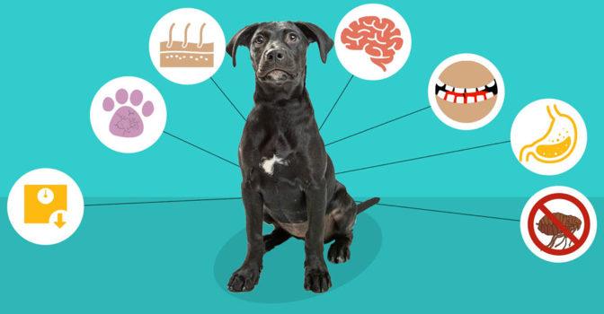 benefits of dog probiotic