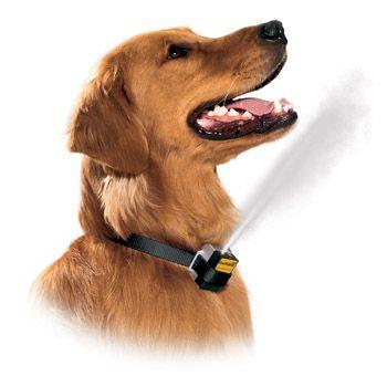 strong dog collars