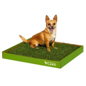 Best Indoor Dog Pottie DoggieLawn Real Grass