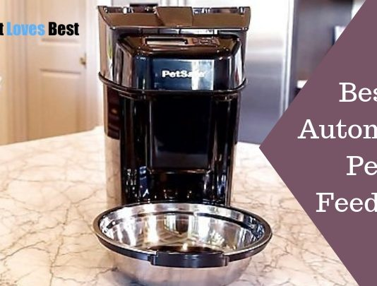 Featured Image Best Automatic Pet Feeders