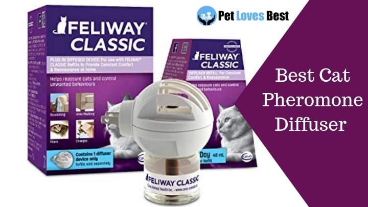 Featured Image Best Cat Pheromone Diffuser