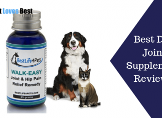 Featured Image Best Dog Joint Supplement Reviews
