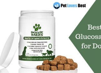 Featured Image Best Glucosamine for Dogs