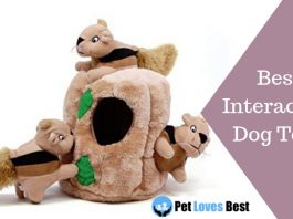 Featured Image Best Interactive Dog Toys