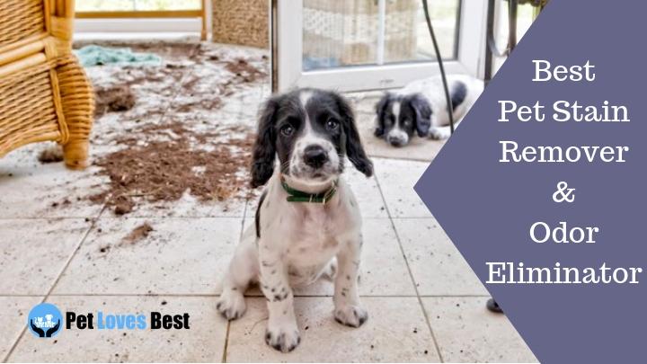 Best Pet Stain Remover & Odor Eliminator of 2019 | Top Urine