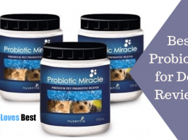 Featured Image Best Probiotics for Dogs Reviews