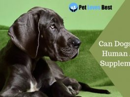Featured Image Can Dogs Take Human Joint Supplements?