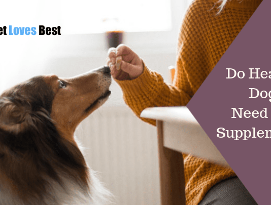 Featured Image Do Healthy Dogs Need Diet Supplements?