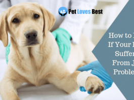 Featured Image How to Know If Your Dog Is Suffering From Joint Problems?